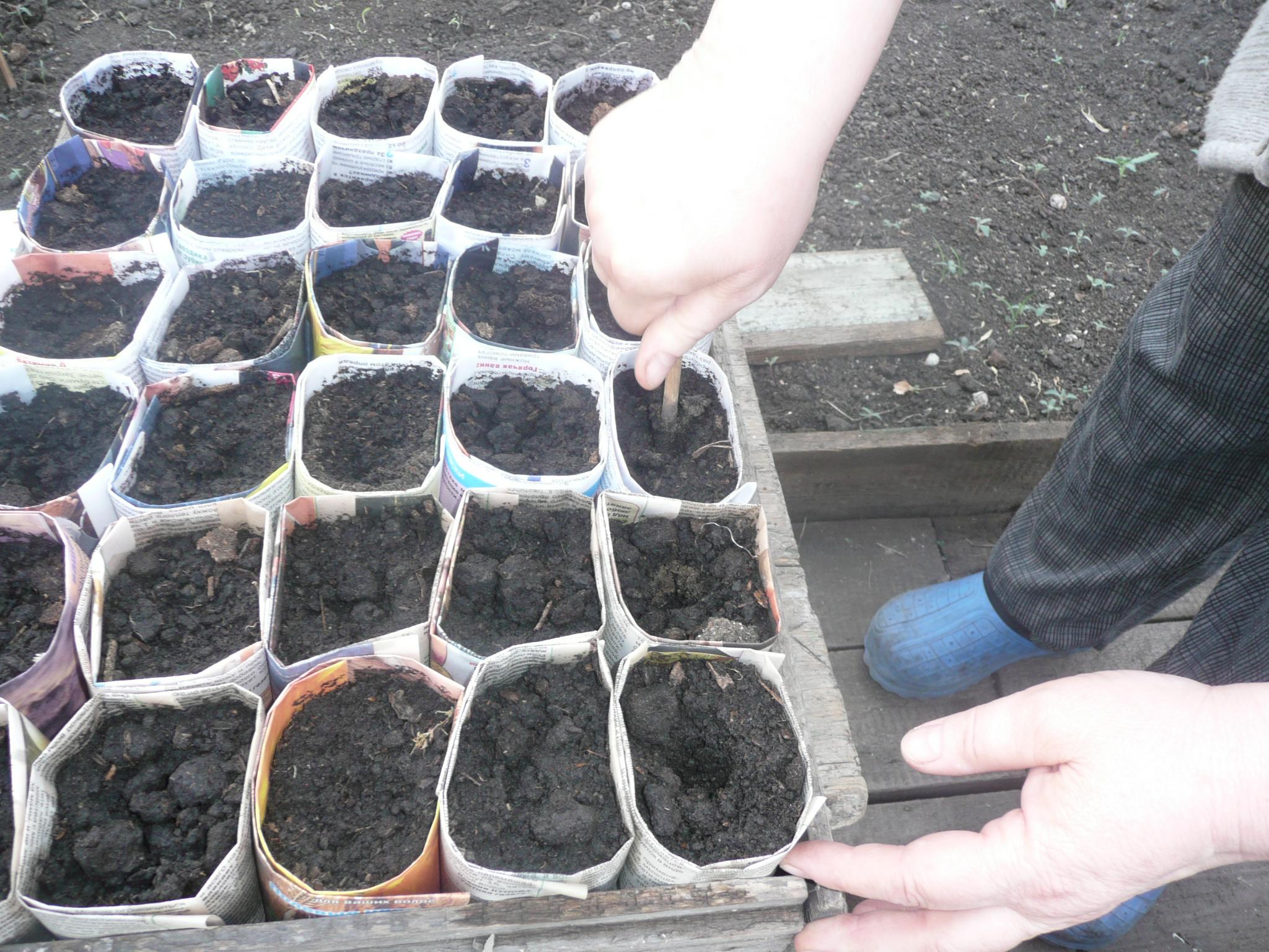 Как вырастить хорошую рассаду в домашних условиях