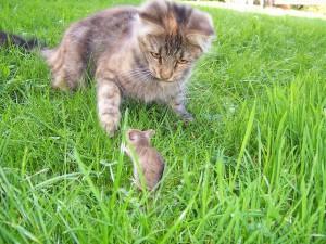 Боремся с мышами и крысами