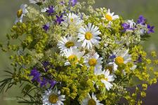 Как составить букет из полевых цветов своими руками