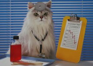 Кошки лекари