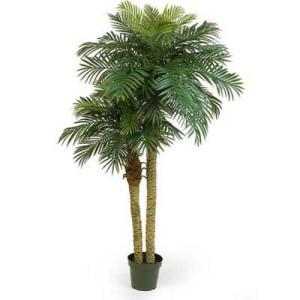 Пальма зимой