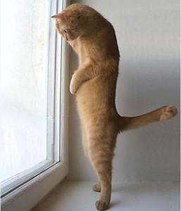 Завести кошку