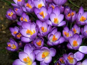 Цветы и замечательная пряность