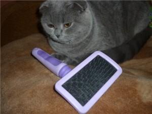 Как удалить кошачью шерсть
