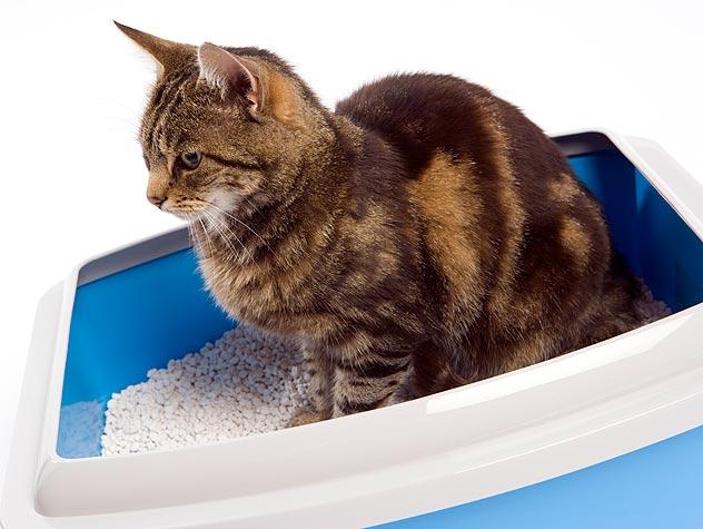 Как помочь пописать коту в домашних условиях 247