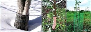 Борьба с садовыми и огородными вредителями