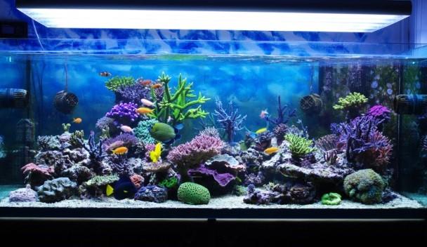 Правильное содержание красноухой черепахи в аквариуме Как обустроить аквариум в домашних условиях