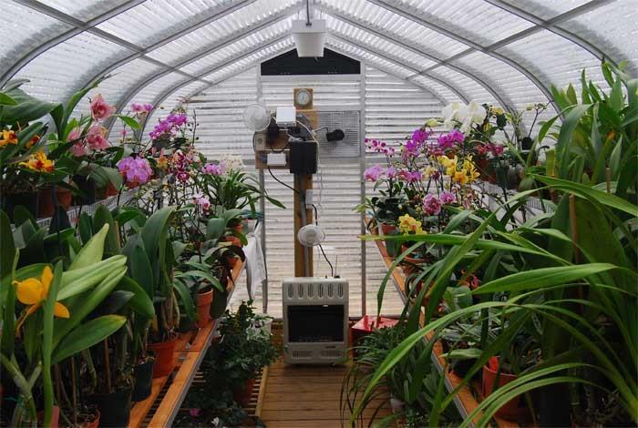 Выращивание орхидей на даче 342