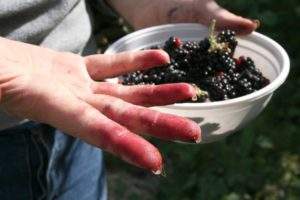 Как отмыть руки от ягод