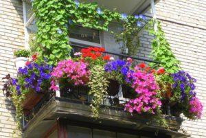Растения для балкона
