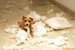 Берем собаку в дом